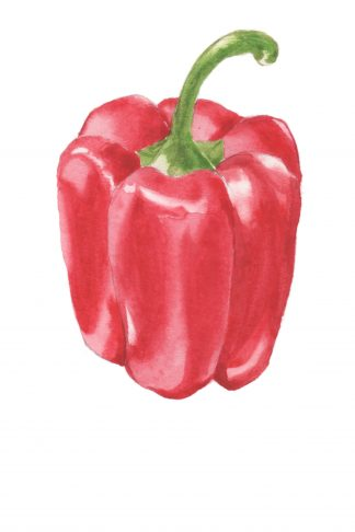 Still Life #05 - Red Pepper