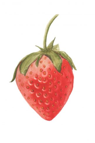 Still Life #06 - Strawberry