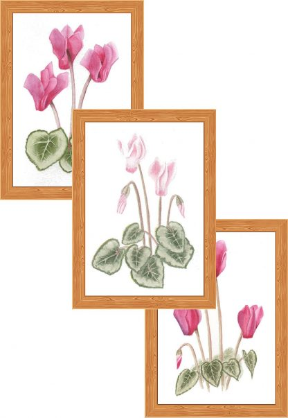 Collection #03 - Cyclamens