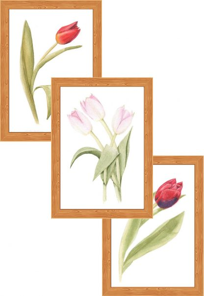 Collection #04 - Tulips